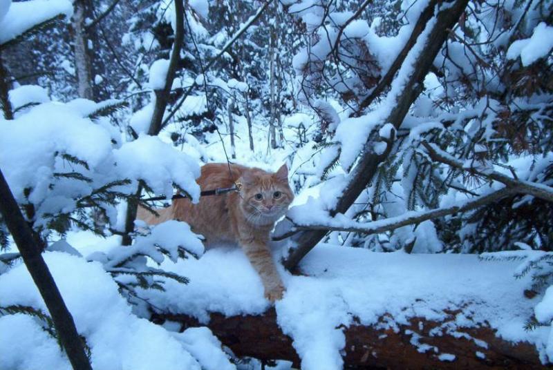 Linda auringottomana talvipäivänä (10.11.2002), kun lumi tuli jo varhain.