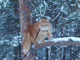 Hei, katsos minne minä olen kiivennyt!!  - Can you jump this high?