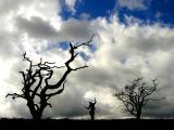Lake District... Trees