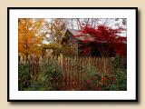 Evening Fall Color at the Studio