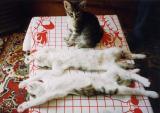 chatons en confiance (fils 1,2,3)