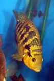 Manaconda
