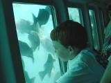 Undersea tour