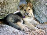Pup on the Rocks by CindyD