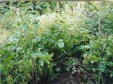 Not only is there massive cemetery growth, but nettles!  Be prepared, and wear appropriate clothing.