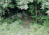 Looking into the wooded cemetery