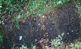 Headstone(#4)