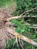 Tree killers 2