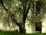 27old shots of this barn in barns galleryDSCN5281.JPG