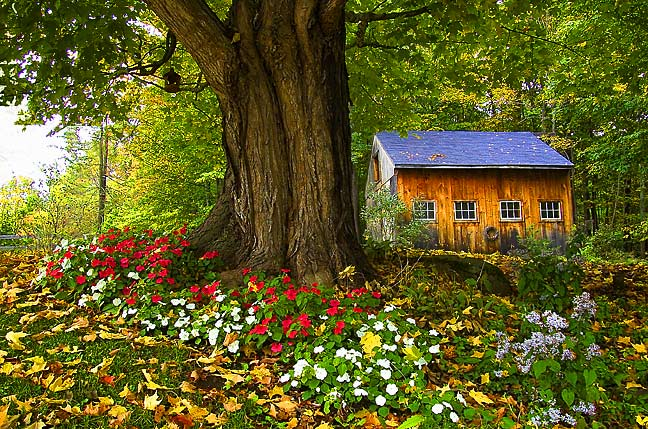 Shed & Flowers