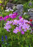 Harbor Flowers #3