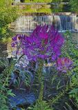 Riverwalk Flowers - #2