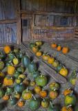 Pumpkins #6