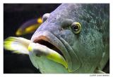 Bermuda - aquarium & Zoo