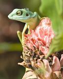 Singapore Flora, Fauna and Wildlife