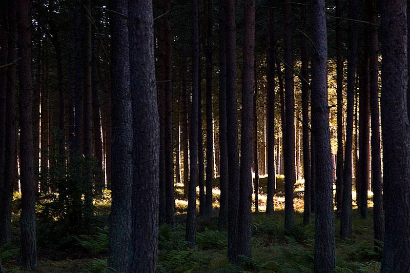Tentsmuir Forrest