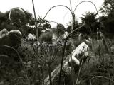 ballintray graveyard 1