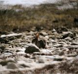 Le lapin baigneur