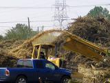 Hurricane Debris Turns to Mulch
