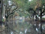 State Street After Katrina