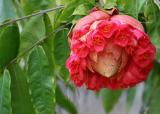 Mauritius - Strange Flower
