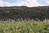 Mauritius - Sugar Cane Fields