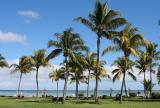 Mauritius - Palm Trees