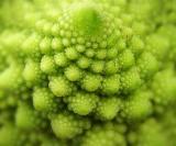 Nature's Spirals