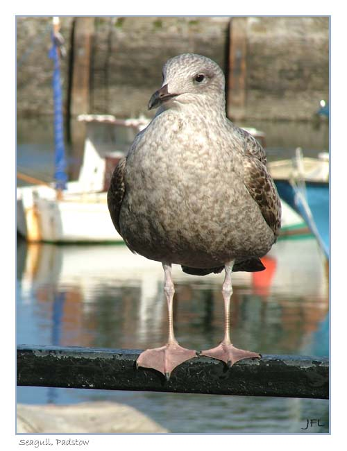 Sammy the Seagull, Cornwall