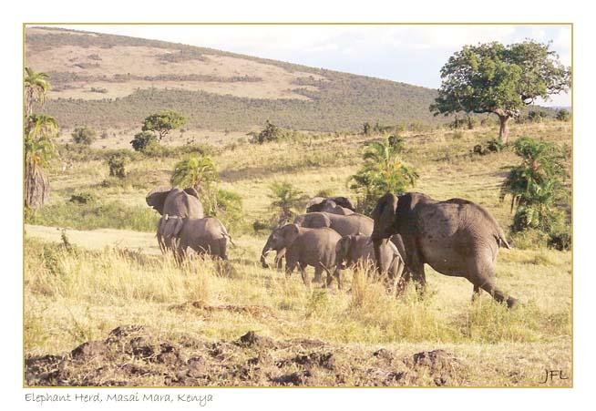 Herd of Ellies