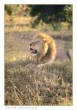 Having a roar