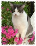 Do I have to pose amongst the flowers?