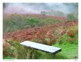 Bench in the Mist