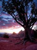 Schnebly Hill Sunset, 2004