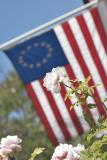 White Rose Flag I