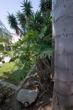Yard Plants