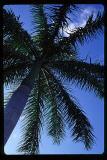 skypalm.jpg