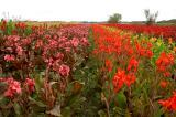Cannas Zuid-Holland.