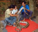 Jaya and the Snake - Run Away, Run Away