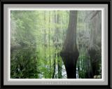 Foggy swamp near Virginia Beach
