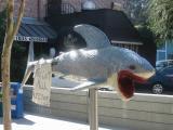 SHRED-HEAD SHARK