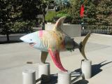 Le requin agile