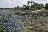 Promenade autour de l'île Berder (golfe du Morbihan)