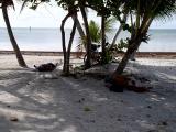 Homeless dudes on the beach