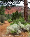Red Mountain, Arizona USA