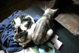 Katzen/Nass/Mein Bett