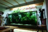 Niigata 2005 - Takashi Amanos home tank -
