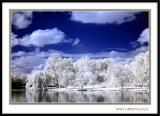 Infrared Images (Canon 300D Unmodified)