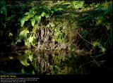 Creek Mirror