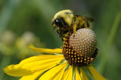 Pollination is a messy business.jpg